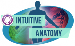 intutive-anatomy icon