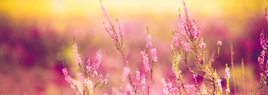 pinkheather1038