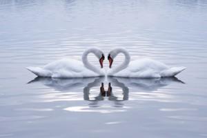 soulmate theta healing